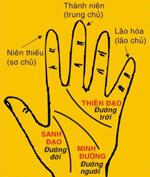 Cách xem chỉ tay hướng dẫn cách xem bói qua đường chỉ tay