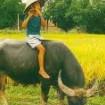 Thuyết minh về con trâu Việt Nam