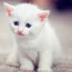 Bài văn mẫu lớp 8 số 2 đề 1: Hãy kể về một kỉ niệm đáng nhớ đối với một con vật nuôi mà em yêu thích