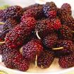 Những lợi ích sức khỏe bất ngờ từ trái dâu tằm