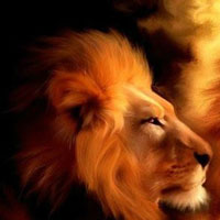 Bạn có tính cách của loài mãnh thú nào?