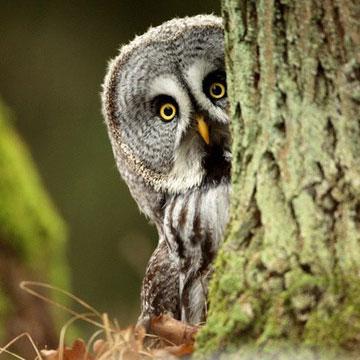 Thử tài tinh mắt - Tìm con vật trong bức tranh