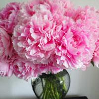 Bạn là loài hoa nào giữa xứ sở của những bông hoa?