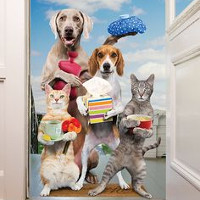 Flashcard cho bé: Chủ đề tên các loại động vật