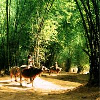 Văn mẫu lớp 7: Biểu cảm về cây tre Việt Nam