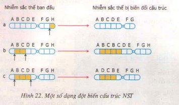 Bài tập môn Sinh học lớp 9