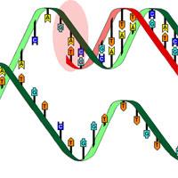 Bài tập trắc nghiệm gen, mã di truyền và quá trình nhân đôi ADN