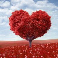 Học tiếng Anh hò hẹn với ''gấu'' qua bài trắc nghiệm về Tình yêu