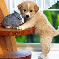 Bài văn mẫu lớp 8 số 5 đề 5: Thuyết minh về một giống vật nuôi