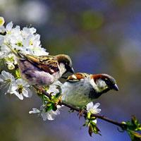 Phân tích khổ thơ đầu trong bài Mùa xuân nho nhỏ của Thanh Hải