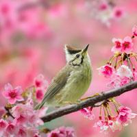 Khát vọng dâng hiến cho đời của nhà thơ Thanh Hải trong khổ 4, 5 bài thơ Mùa xuân nho nhỏ