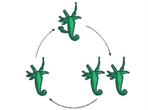 Lý thuyết sinh sản vô tính ở động vật