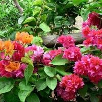 Văn mẫu lớp 4: Tả cây hoa mà em yêu thích