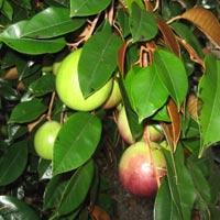 Văn mẫu lớp 4: Viết về lợi ích của một loại cây mà em biết
