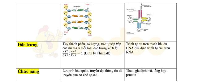 Cơ sở vật chất di truyền cấp độ phân tử