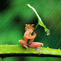 Giáo án lớp cơm nát (19 - 24 tháng): Chú ếch dễ thương