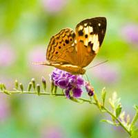 Giáo án lớp lá (5 - 6 tuổi): Chú bướm dễ thương