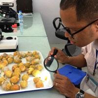 Thủ tục đăng ký kiểm dịch thực vật xuất khẩu