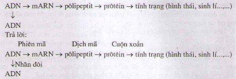 Bài tập Sgk môn Sinh học lớp 12