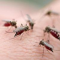 Bản cam kết thực hiện các biện pháp phòng chống sốt xuất huyết