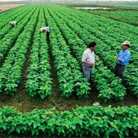 Mẫu hợp đồng chuyển nhượng quyền sử dụng đất nông nghiệp