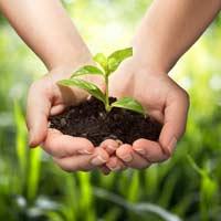 Viết thư Quốc tế UPU lần thứ 47: Bài mẫu về vấn đề môi trường