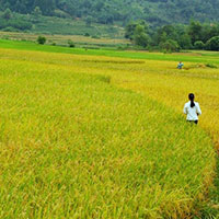 Mẫu đơn đăng ký chuyển đổi cơ cấu cây trồng trên đất trồng lúa