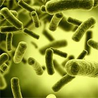 Trắc nghiệm Sinh học 10 bài 22: Dinh dưỡng, chuyển hóa vật chất và năng lượng ở vi sinh vật
