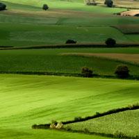 Mẫu số 13/ĐK: Quyết định về việc gia hạn sử dụng đất