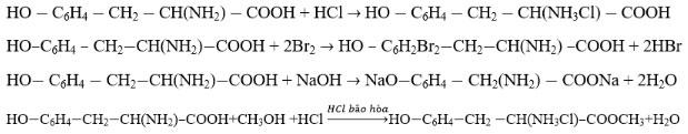 Cấu tạo và tính chất của amin, amino axit và protein