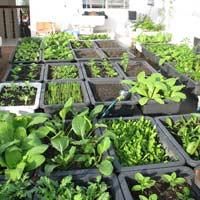 Tập làm văn lớp 4: Bài kiểm tra viết - Miêu tả cây cối