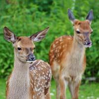 Giải bài tập SGK Khoa học 5 bài 60: Sự nuôi và dạy con của một số loài thú