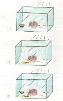 Giải bài tập Khoa học 4