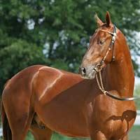 Tả con ngựa mà em có dịp nhìn thấy