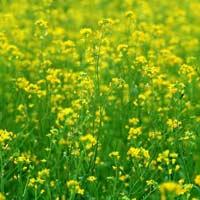 Giải bài tập SGK Khoa học 4 bài 66: Chuỗi thức ăn trong tự nhiên