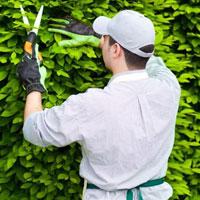Mẫu hợp đồng cung cấp chăm sóc cây cảnh