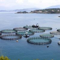 Đơn đăng ký thức ăn chăn nuôi, thủy sản nhập khẩu