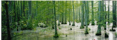 Giải bài tập SGK Địa lý 8 bài 21: Con người và môi trường địa lí