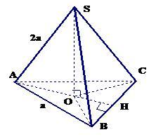 Hình chóp đều: Hình chóp đều tam giác, hình chóp đều tứ giác