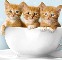 Tranh tô màu con mèo dễ thương cho bé