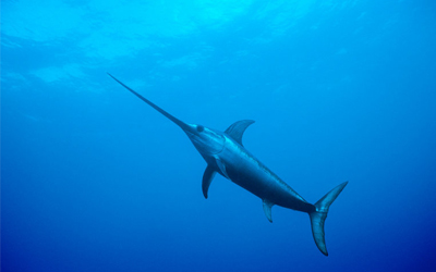 Sea Animals Vocabulary