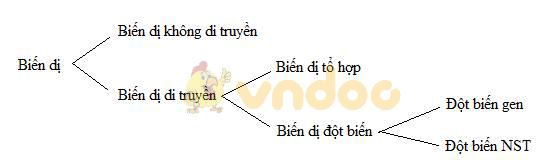 Lý thuyết Sinh học lớp 9 bài 21: Đột biến gen