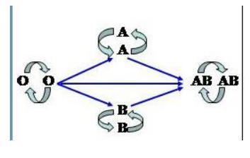 Lý thuyết Sinh học lớp 8 bài 15: Đông máu và nguyên tắc truyền máu