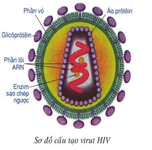 Lý thuyết Sinh học lớp 8 bài 65: Đại dịch AIDS - Thảm họa của loài người