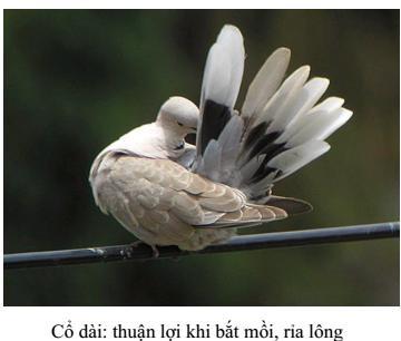 Lý thuyết Sinh học lớp 7 bài 41: Chim bồ câu