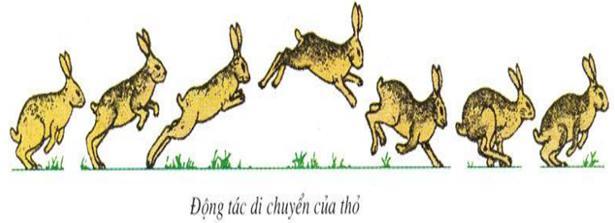 Lý thuyết Sinh học lớp 7 bài 46: Thỏ