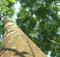 Đơn đề nghị giao đất rừng, cho thuê đất, cho thuê rừng