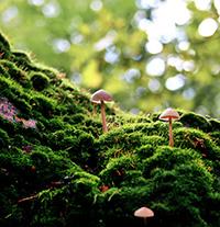 Bảng kê lâm sản áp dụng với thực vật rừng