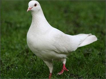 Kể về một loài chim mà em yêu thích