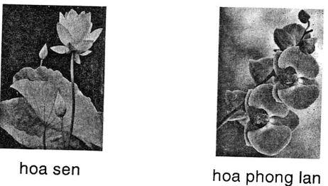 Giải vở bài tập Tiếng Việt 1 tập 2: Tập đọc: Hoa ngọc lan